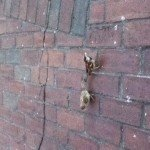 birds on sidewalk
