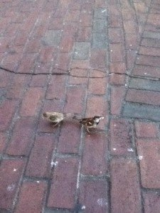 birds on brick walkway